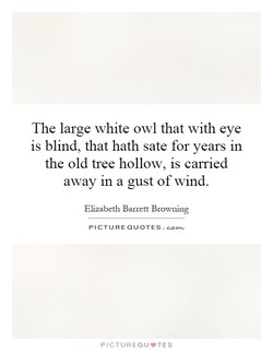 The large white owl that with eye 