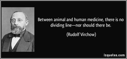 Between animal and human medicine, there is no 