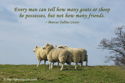 Every man can tell how many goats or sheep 