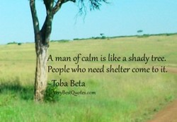 A man ofcalm is tike a shady tree. 