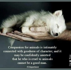 Compassion for animals is intimately 