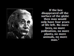 If the bee 