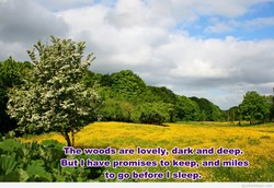 The wood*areelovely, darkeand deep' 