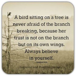 A bird sitting on a tree is 