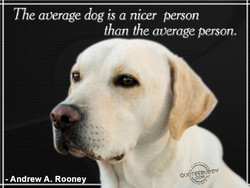 The average dog is a nicer person 