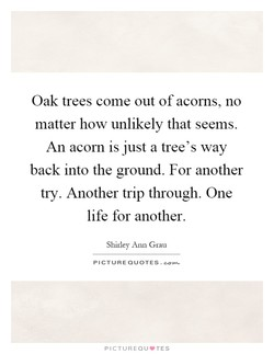 Oak trees come out of acorns, no 