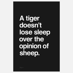 A tiger 
