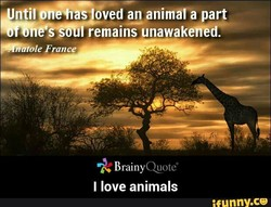 an animåLå part remains unawakeWéden BrainyQuoteD I love animals nny.ce —Ole France