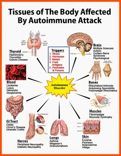 Tissues of The Body Affected 