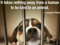 It takes nothing away from a human 
