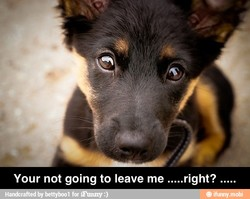 Your not going to leave me .....right? .