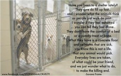 Have yoff een to a shelter lately? 
