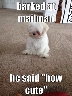 —barked at 