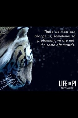 Thoßeve meet can 