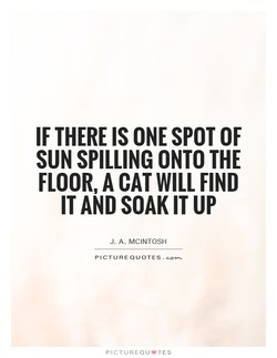 IF THERE IS ONE SPOT OF 