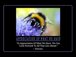 APPRECIATION OF WHAT WE HAVE
