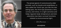 The pineal gland of evolutionarily older 