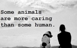 Some animals 