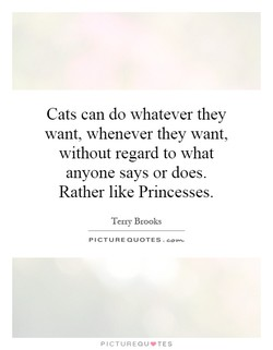 Cats can do whatever they 