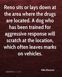 Reno sits or lays down at 