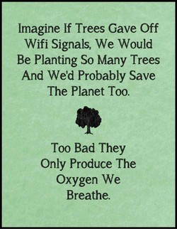 Imagine If Trees Gave Off 