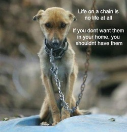 Life on a chain is 
