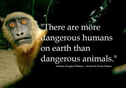 ere are möre angerous humans on earth than dangerous animals.