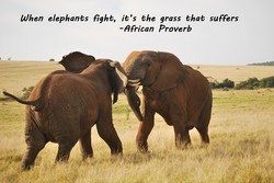When elephants fight, it's the grass that suffers 