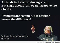 All birds find shelter during a rain. 