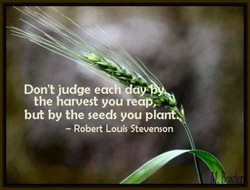 Don't judge e 