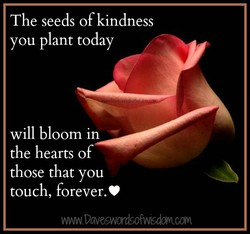 The seeds of kindness 