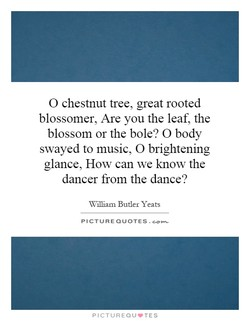 O chestnut tree, great rooted 