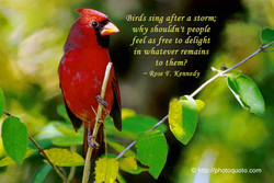 (Birds sing after a storm; 