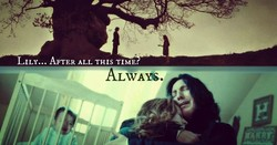 LILY... AFTER ALL THIS TIME. 