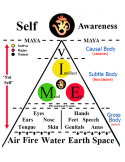 - - - MAYA - - - - - - MAYA - 