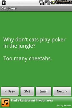 Cat Jokes! 