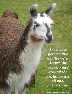 Try a new 