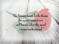 e human heart reels things 