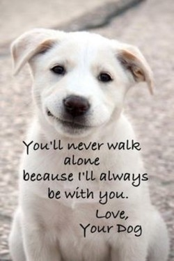 YOWLL b.•vever walk 