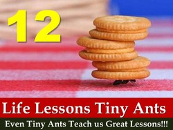 Life Lessons Tiny Ants 