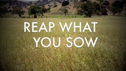 REAP WHAT 