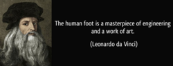 The human foot is a masterpiece of engineering 