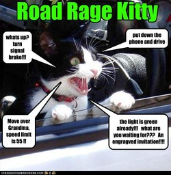 Road Rage Kitty 
