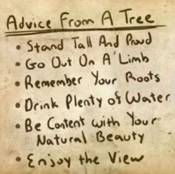 Advice 101 