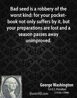 Bad seed is a robbery of the 