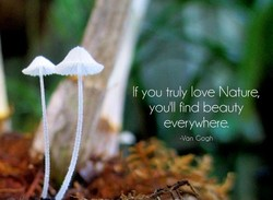 If you truly love Nature, you'll find beauty everywhere. -Van Gogh
