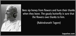Bees sip honey from flowers and hum their thanks 