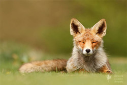 ROESELIEN 