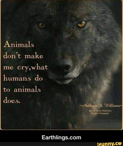 Animals 