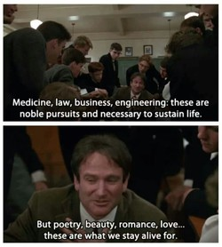Medicine, law, business, engineering: these are 